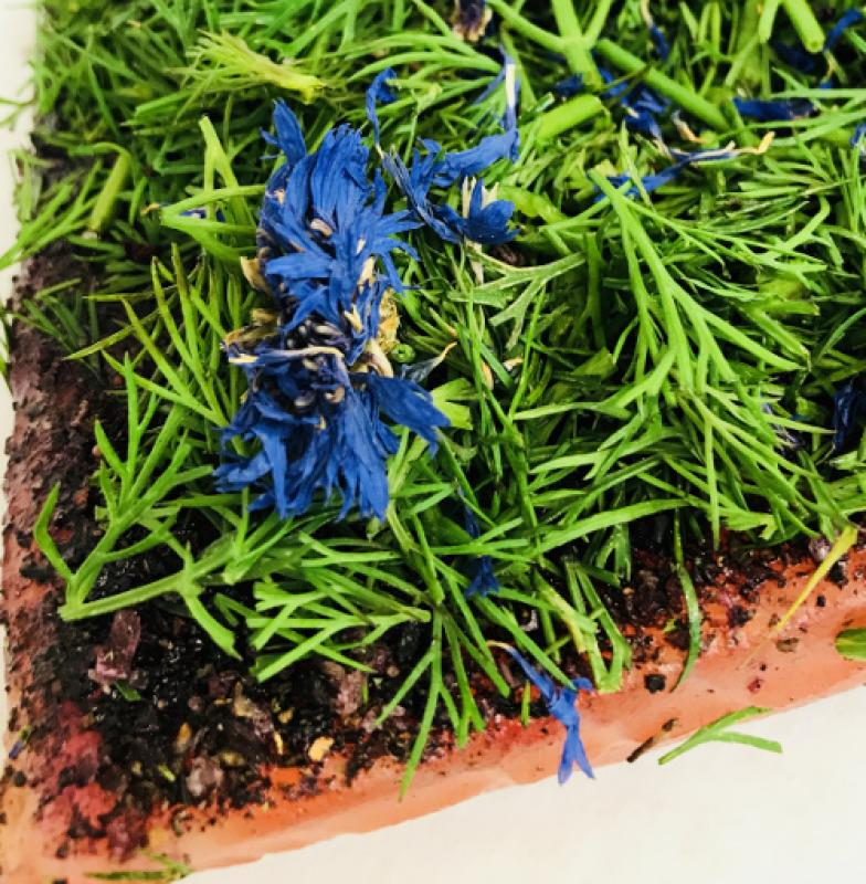 Graved salmon (pickled salmon) Nordic Arctic with aquavit, nordic spices , fresh dill and cornflower - Kopie