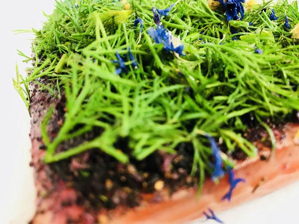 Graved salmon (pickled salmon) Nordic Arctic with aquavit, nordic spices , fresh dill and cornflower